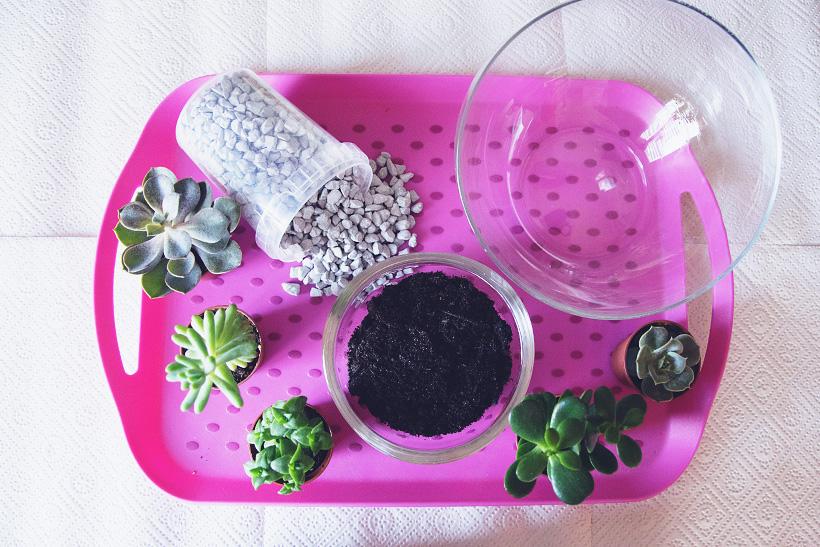 Zubehör Sukkulenten Mini Garten im Glas DIY