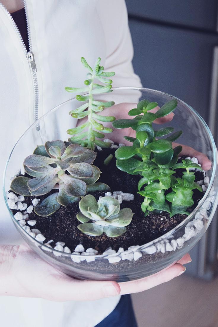 Sukkulenten Mini Garten im Glas DIY Pinterest