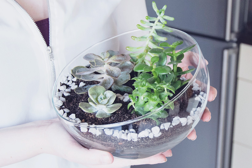 Sukkulenten Mini Garten im Glas DIY